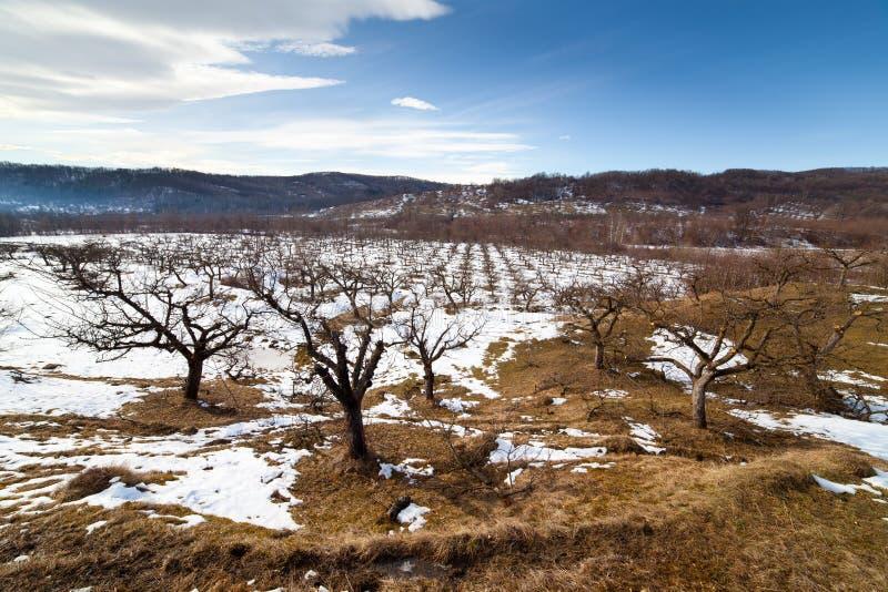 Obstgarten im Winter stockbilder