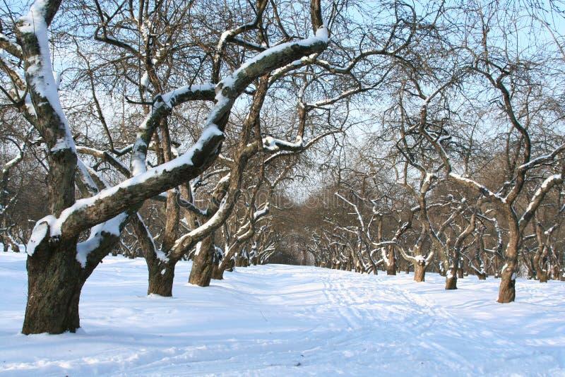 Obstgarten im Winter. lizenzfreie stockfotos
