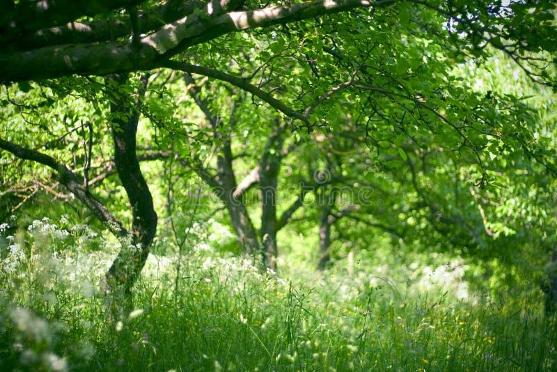 Obstgarten morgens lizenzfreie stockfotos