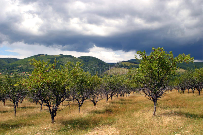 Obstgartenbäume lizenzfreies stockfoto