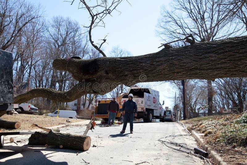 Obstrução da árvore fotografia de stock royalty free