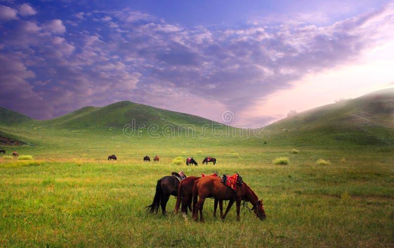 obszarów trawiasty konie obrazy stock