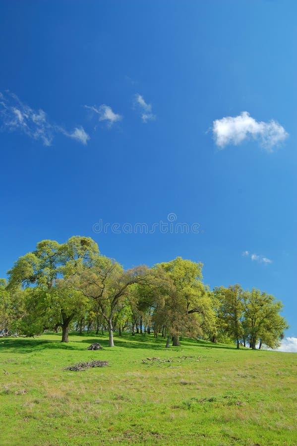 obszarów wiejskich wiosna obrazy royalty free
