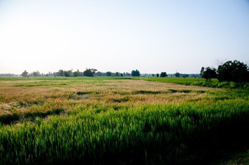 Obszar trawiasty pierwszy rzecz życie w Tajlandia fotografia stock