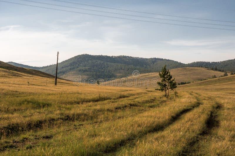 Obszar trawiasty przy Okhota w lecie obrazy stock