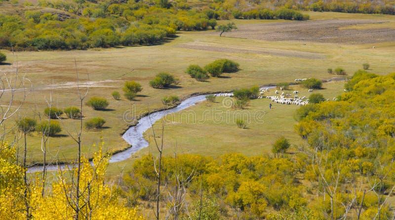 Obszar trawiasty w jesieni zdjęcia stock