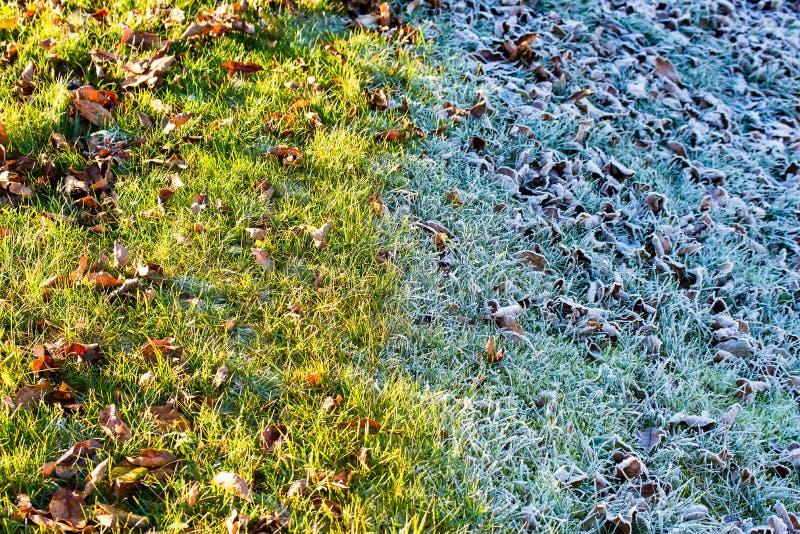 Obszar trawiasty w zimie obraz stock