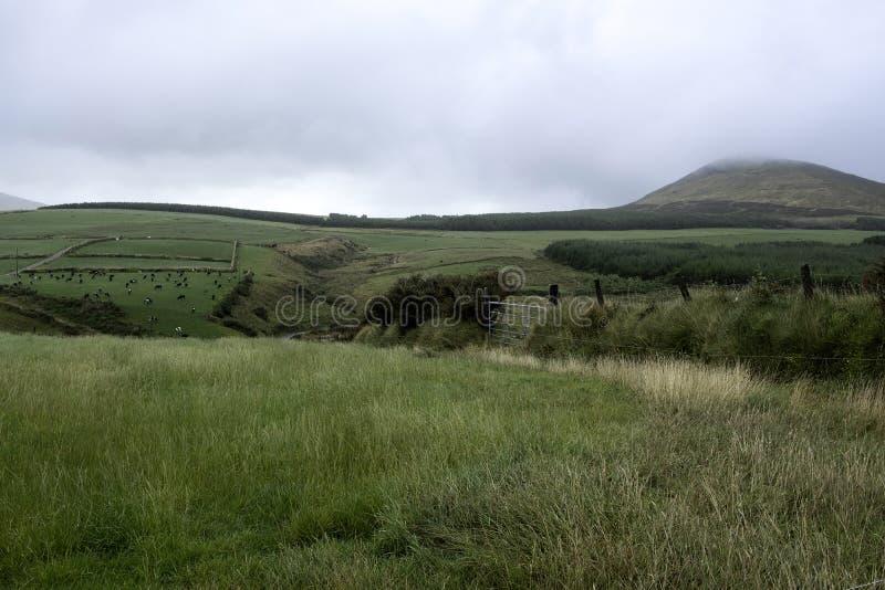 Obszary wiejskie w Republice Irlandii obraz royalty free