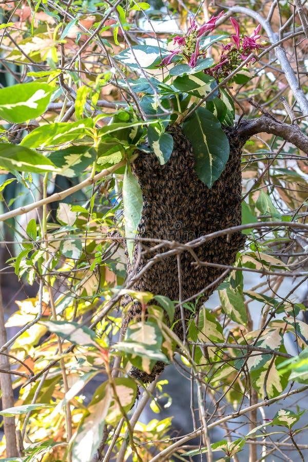 Obszywa wiele gniazdeczka z gałązkami i liśćmi obraz stock