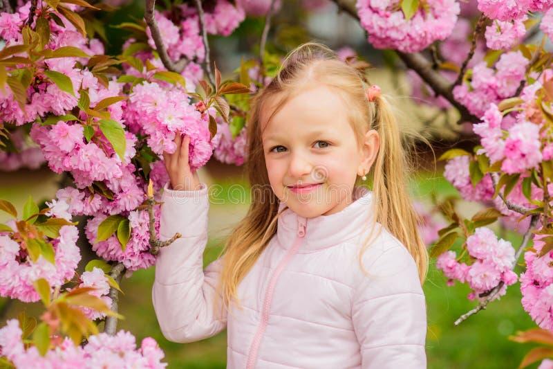 Obtenha livrado da alergia sazonal Menina que aprecia o aroma floral Conceito da alergia do p?len Criança na árvore cor-de-rosa d imagem de stock