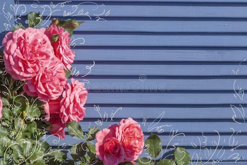 Obturadores de madeira azuis entrelaçados com rosas cor-de-rosa fotos de stock royalty free
