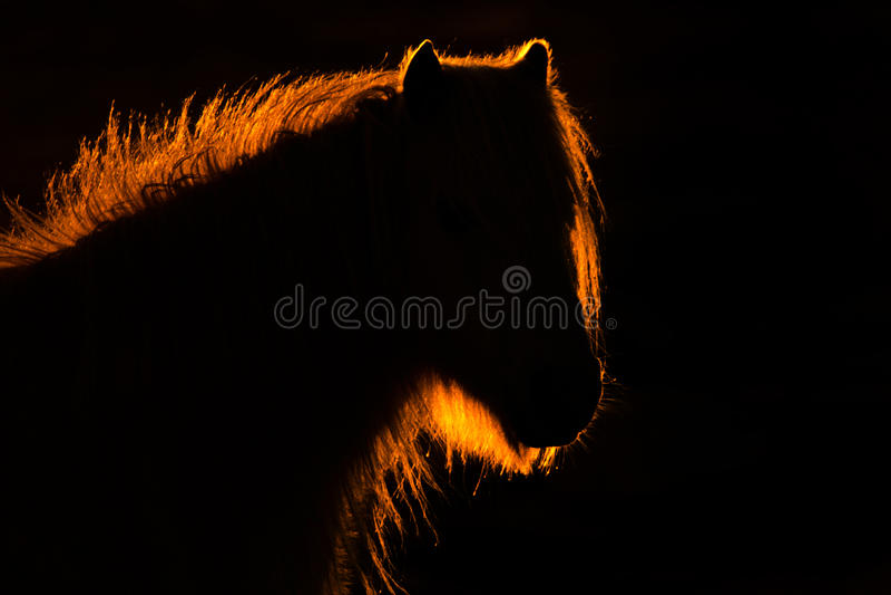 Obturation sauvage Ponys photographie stock libre de droits