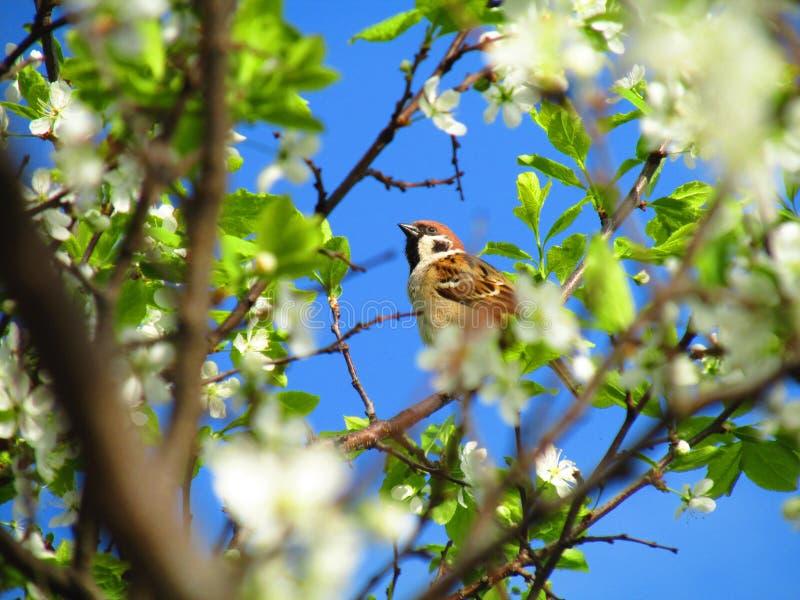 Obudzenie wiosny piękno obrazy royalty free
