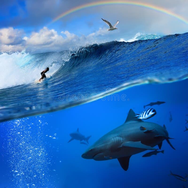 Océan avec l'onde et le requin de rupture d'arc-en-ciel de surfer