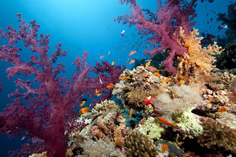 Océan, corail et poissons photos libres de droits