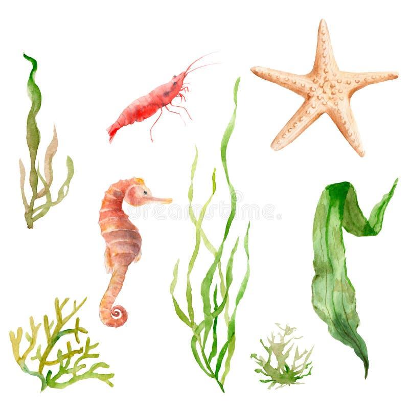 Océan d'ensemble d'aquarelle, mer : algue, étoile de mer, hippocampe, crevette illustration stock