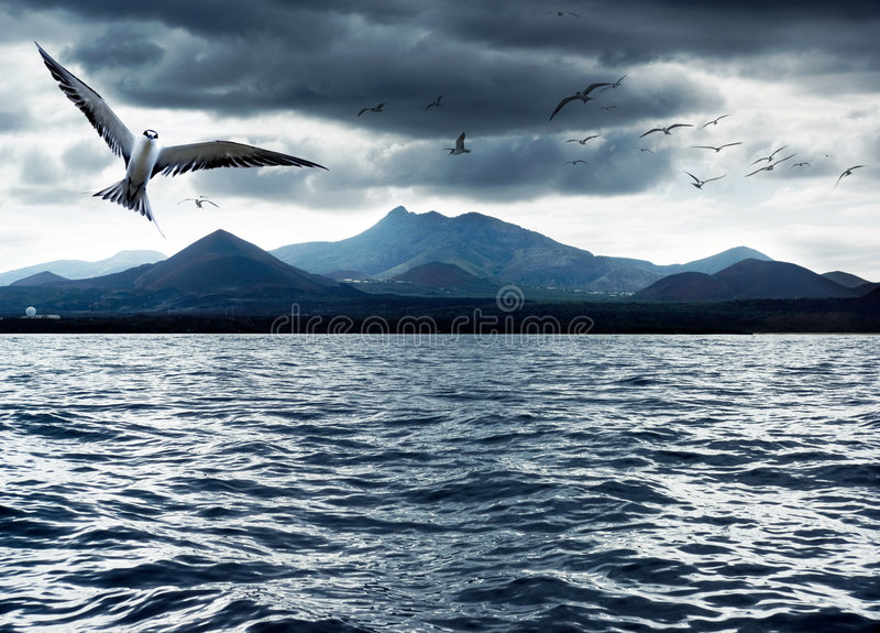 océan d'oiseaux photographie stock