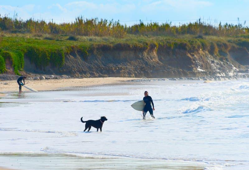 Océan de chien de planche de surf de surfer de femme photographie stock libre de droits