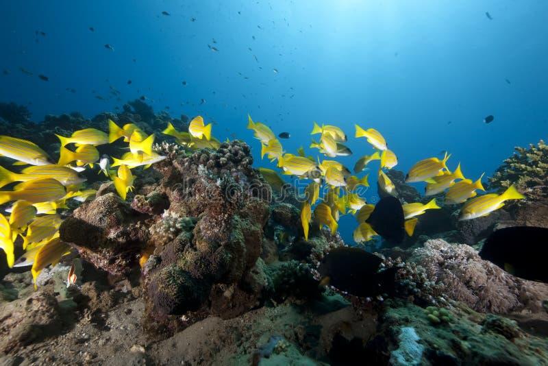 Océan et cordelettes bleu-rayées photo libre de droits