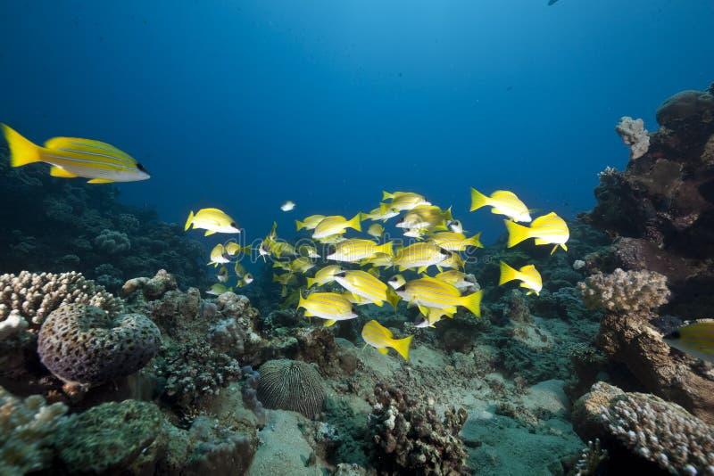 Océan et cordelettes bleu-rayées photos stock