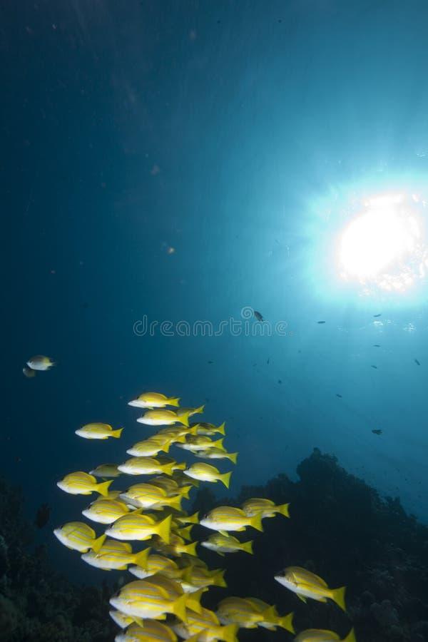 Océan et cordelettes bleu-rayées photos libres de droits