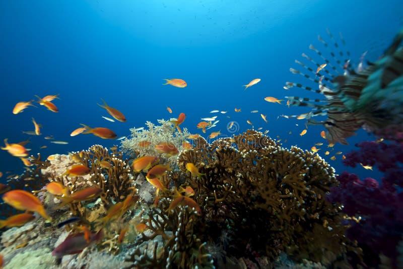 Océan et poissons photo stock
