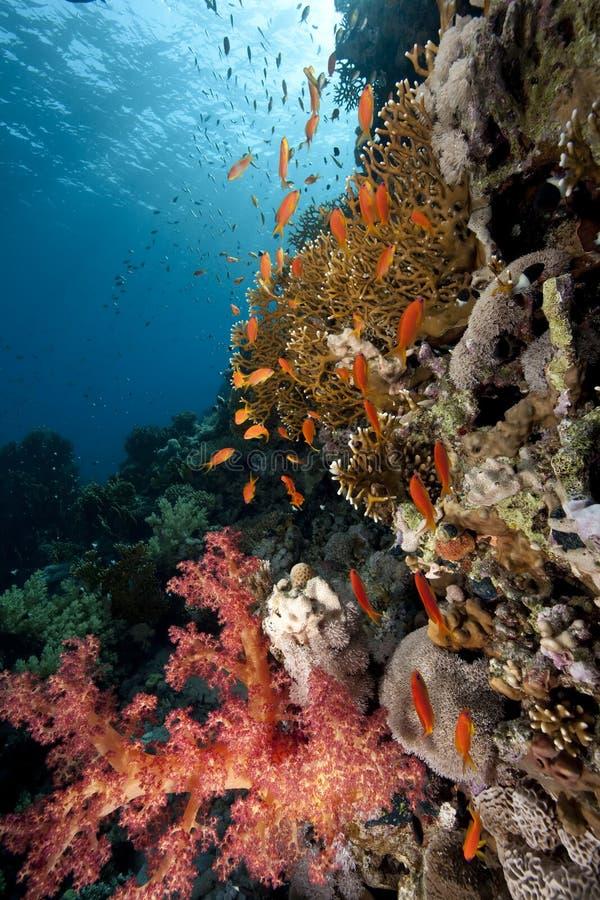 Océan et poissons images libres de droits