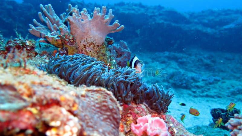 Océano Coral Scenery imagen de archivo libre de regalías