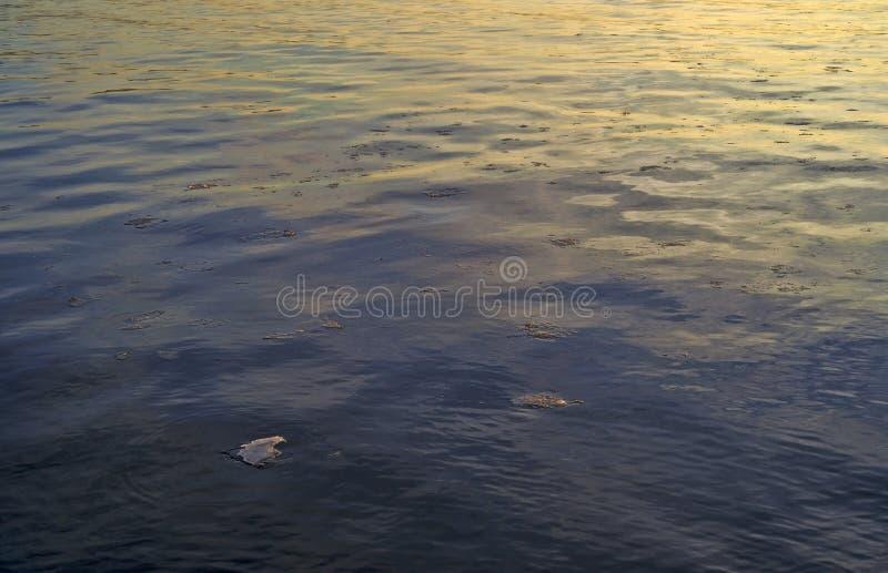 Océano de la madrugada con los pequeños pedazos del hielo flotante fotos de archivo libres de regalías