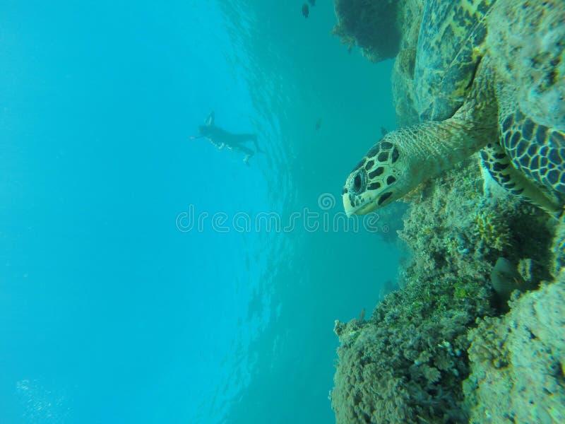Océano de la vida de Bali foto de archivo libre de regalías