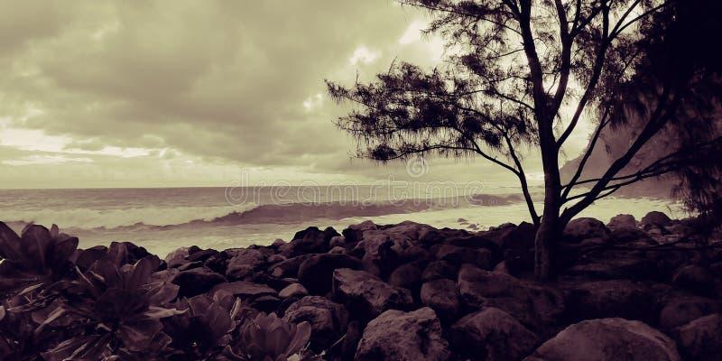 Océano, ondas y árbol fotos de archivo libres de regalías