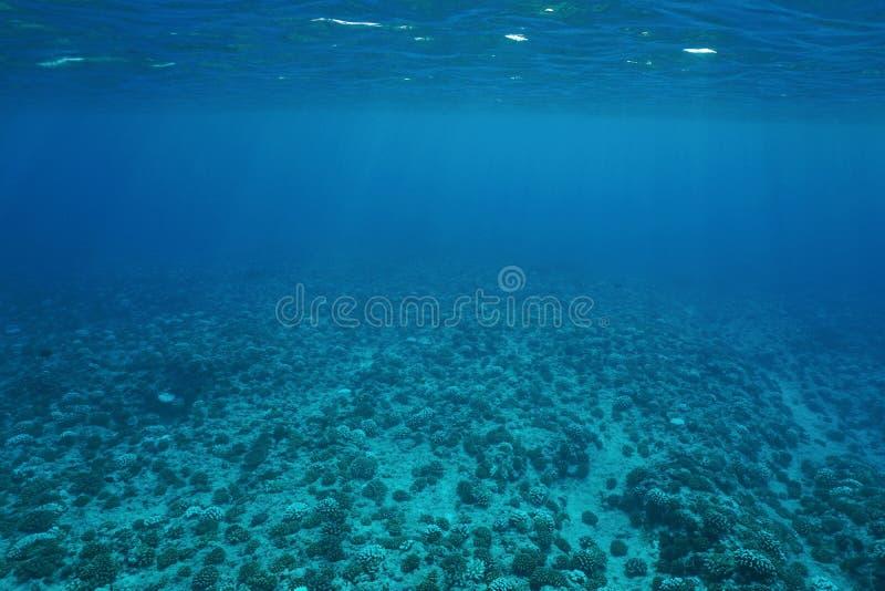 Océano Pacífico subacuático del suelo marino del paisaje foto de archivo libre de regalías