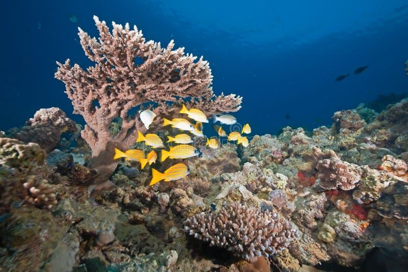 Océano, sol y mordedores azul-rayados imagen de archivo libre de regalías
