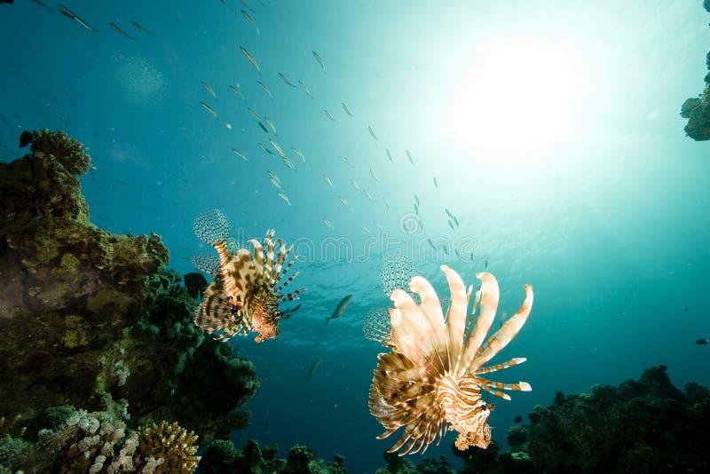 Océano, sol y pescados foto de archivo libre de regalías