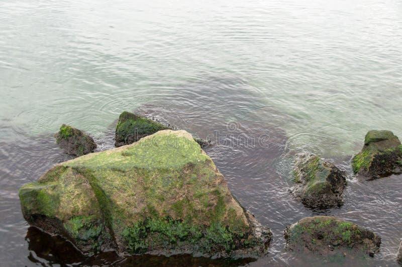 Océano verde fresco foto de archivo libre de regalías