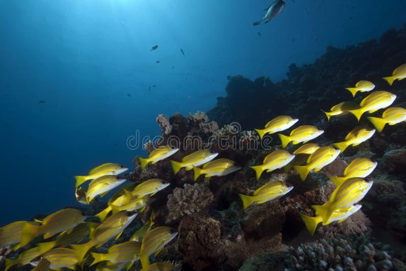 Océano y mordedores azul-rayados imagenes de archivo