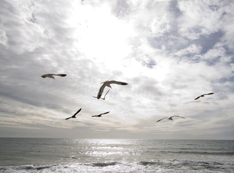 Océano y pájaros imagen de archivo libre de regalías