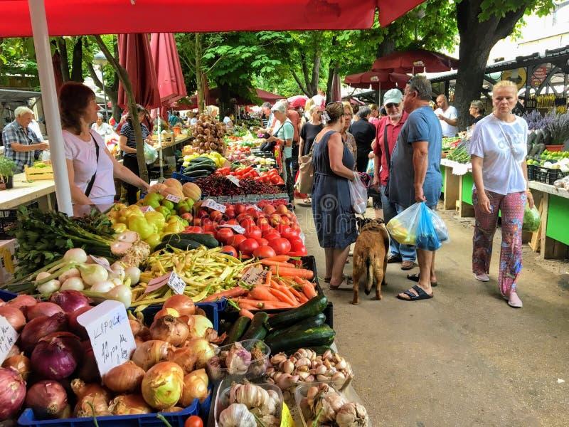 Ocals i goście robi zakupy przy miejscowym wprowadzać na rynek dla świeżego produkt spożywczy na pięknym letnim dniu pod drzewami obraz royalty free