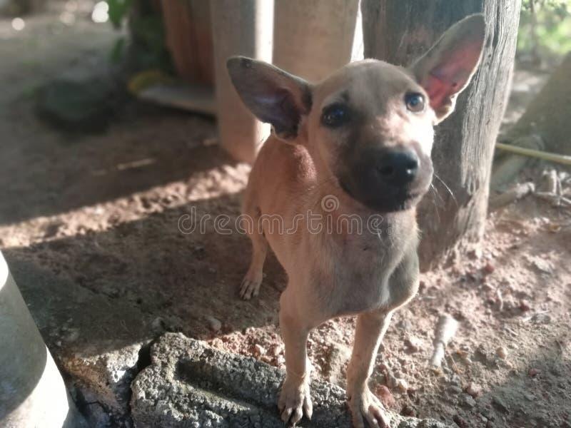 Occhi brillanti del cane fotografie stock libere da diritti