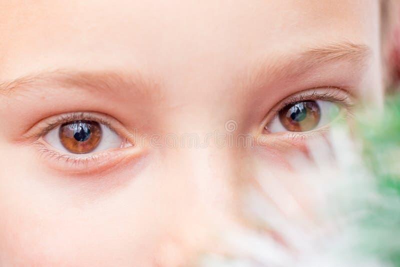 Occhi del primo piano del bambino vicino all'albero di Natale Look_ messo a fuoco attento immagine stock libera da diritti