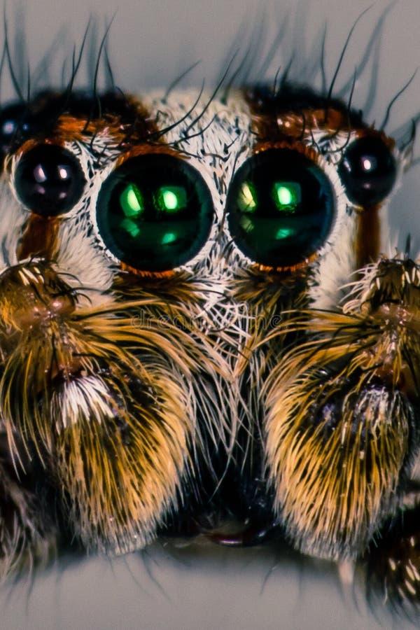 Occhi del ` s del saltatore fotografie stock libere da diritti