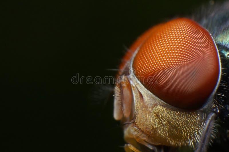 Occhi della mosca comune immagini stock