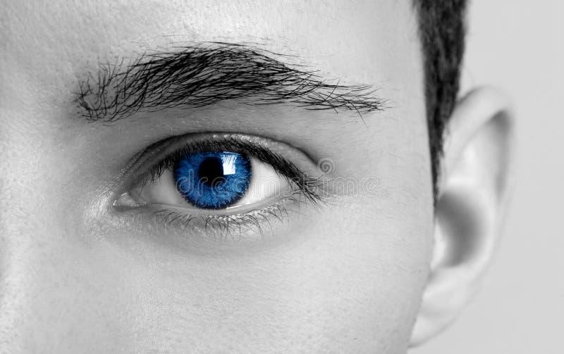 Occhi di azzurri immagini stock libere da diritti