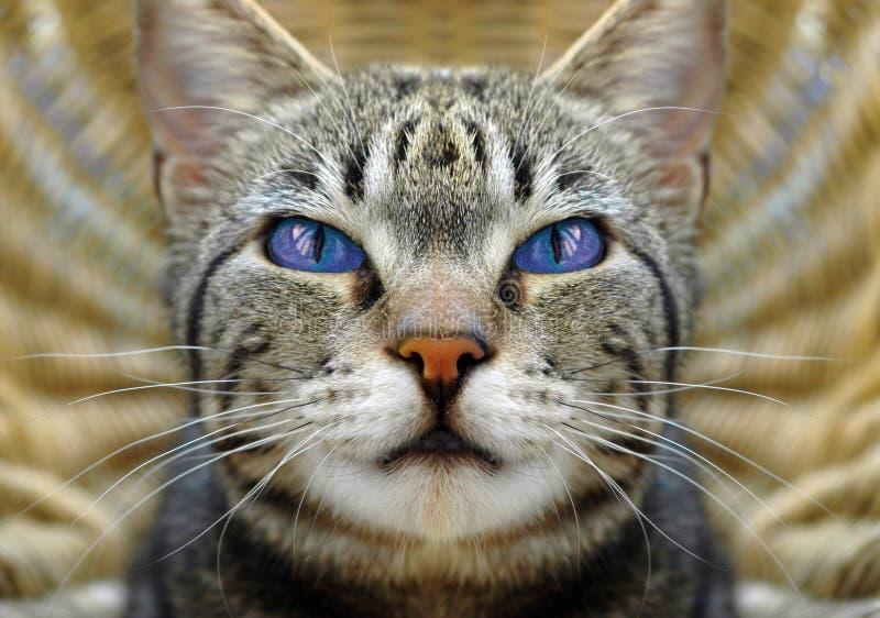 Occhi di Catâs immagini stock libere da diritti