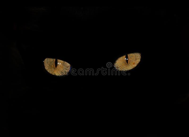 Occhi di gatto nello scuro fotografia stock