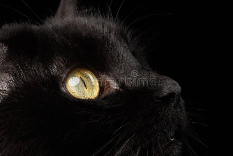 Occhi di giallo del primo piano di Cat Snout nera su fondo immagini stock libere da diritti