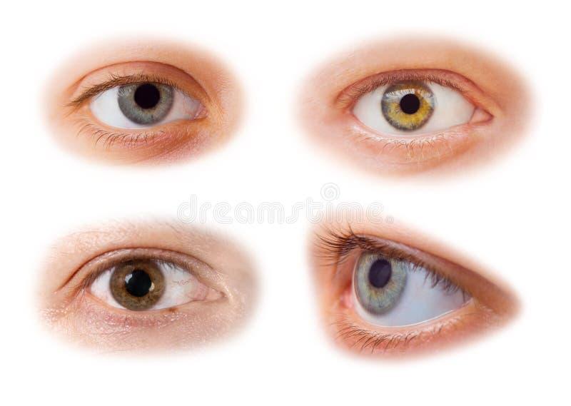 Occhi impostati fotografia stock libera da diritti