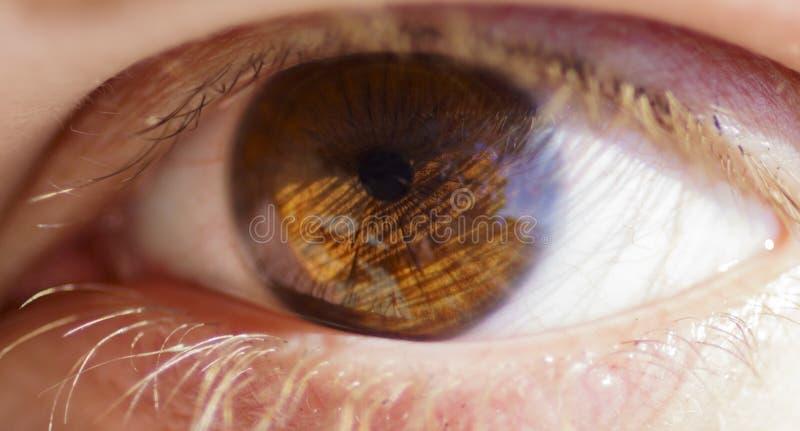 Occhi marroni femminili alla luce del sole immagine stock