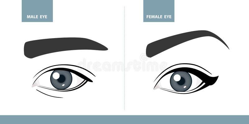 Occhi maschii e femminili Illustrazione di vettore illustrazione vettoriale