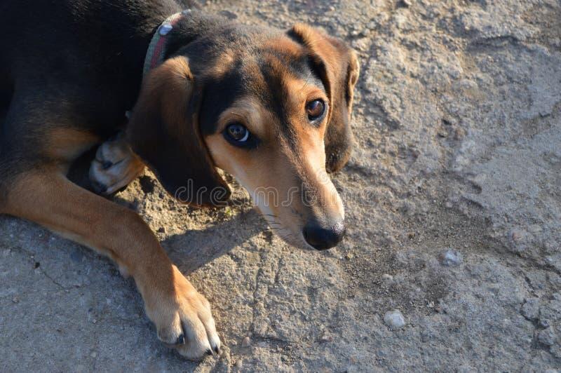Occhi tristi di un cane spaventato immagine stock - Colorazione immagine di un cane ...